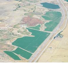 alfalfa (lucerne) fields along Dutch Creek