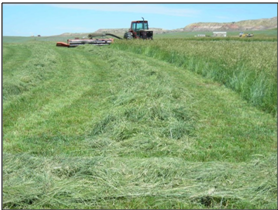 grass hay windrows and swathing at Perry